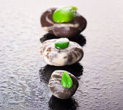 Pebble with green leafs on black glass Royalty Free Stock Photo