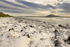 Pebble Island in Falkland Islands Stock Photography