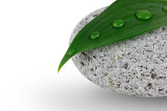 Pebble and leaf. With water drops stock photography