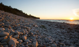 Pebble limestone beach during sunset. Limestone beach with a high cliff in the background on the island of Gotland in the Balticsea in Sweden Royalty Free Stock Photo