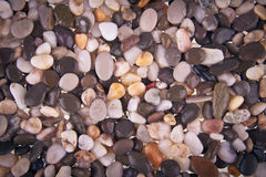 Pebble moistened with water Stock Photos