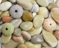 Pebble and sea urchin Stock Photography