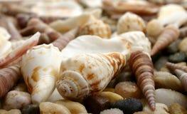 Pebble and seashell. Pebbles and seashells natural background Stock Image
