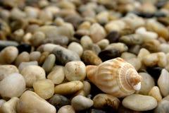 Pebble and seashell. Colorful pebble sand seashell background Royalty Free Stock Photo