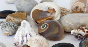 Pebble and shell Stock Image