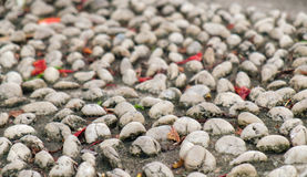 Pebble stone path. Royalty Free Stock Photos