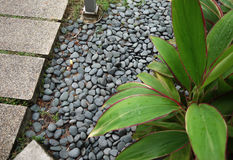 PEBBLE STONES. IN THE GARDEN WITH PLANT Royalty Free Stock Photos