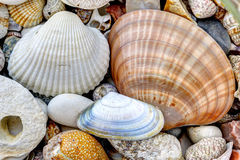 Pebble stones and scallops and shells Stock Photography