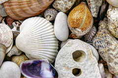 Pebble stones and scallops and shells Royalty Free Stock Photos