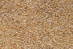 Pebble texture Royalty Free Stock Photos