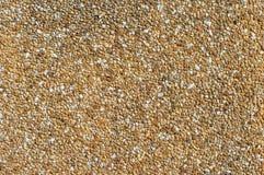 Pebble wall bakground texture. Close up Royalty Free Stock Photos