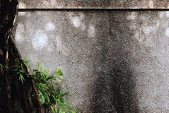 Pebble Washout Finish Whitewash Wall with Tree Pla. Details of a Pebble Washout Finish Whitewash Wall with Tree Plant Background Stock Photo