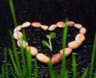 Pebblen bildar in av hjärta med gröna leafs på svart exponeringsglas Royaltyfria Foton