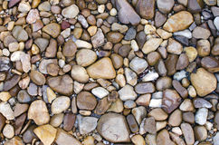 Pebbles. A background of various pebble stones texture Royalty Free Stock Photo