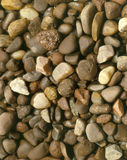 pebbles Royaltyfri Bild