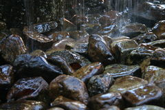 Pebbles. Wet pebbles in the rain Royalty Free Stock Photography