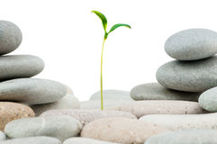 Free Pebbles And Seedlings Stock Photos - 19280313
