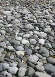 Pebbles on beach Stock Photography