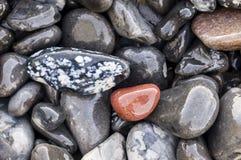 Pebbles on the beach Stock Image