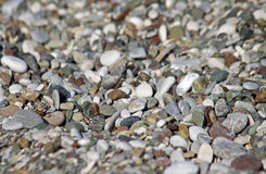 Pebbles on the beach Royalty Free Stock Image