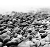 Pebbles on a beach. Dreamy shot of pebbles on a beach (monochrome royalty free stock image