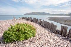 Porlock weir beach in summer exmoor. Pebbles on the beach at porlock weir in summer exmoor somerset uk Stock Photo
