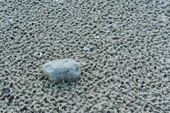 Pebbles on the beach. Royalty Free Stock Photo