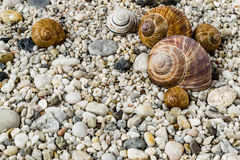 Pebbles on beach with snail shells Royalty Free Stock Photos