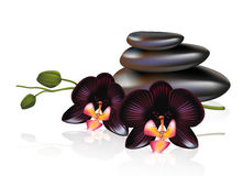 Pebbles with black orchids. Spa composition. Royalty Free Stock Photography