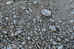 Pebbles on the black sand beach Stock Photography