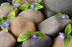 Pebbles with blue flowers Stock Photos