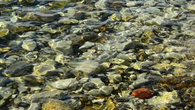 Pebbles in clear water. Pebbles in the clear water stock video footage