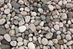 Pebbles closeup. From the Black sea seashore Stock Photography