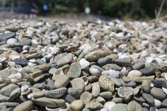 Shingle. Pebbles closeup on the beach Royalty Free Stock Images