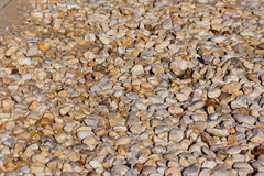 Pebbles. Collection of Rocks and Stones on the ground by the Beach Stock Photography