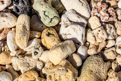 Pebbles and corals, Boracay Island, Philippines Royalty Free Stock Photo