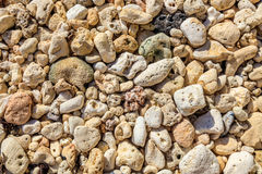 Pebbles and corals, Boracay Island, Philippines Stock Image