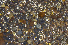 Pebbles and Corals Cornwallis Beach Auckland New Zealand. Earthy and grunge colors Stock Photo