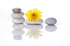 PEBBLES & FLOWER ARRANGEMENT. Six pebbles stacked isolated on white Stock Photography