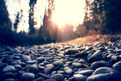 Pebbles in forest Stock Image