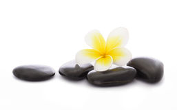 Pebbles and frangipani Royalty Free Stock Photography