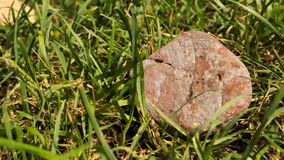 Pebbles in the grass. Royalty Free Stock Photography
