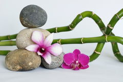 Pebbles gray natural arranged in lifestyle zen with a two-tone orchid and a dark pink orchid bamboo twisted on white background royalty free stock image
