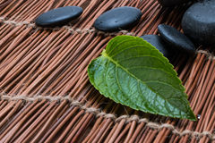 Pebbles and green leaf Royalty Free Stock Photos