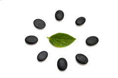 Pebbles and green leaf Royalty Free Stock Photo