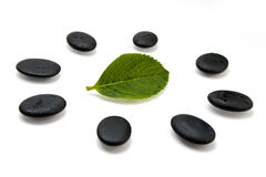 Pebbles and green leaf Royalty Free Stock Photography