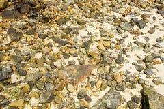 Pebbles on the ground. Beach pebble stones on the ground Stock Image