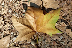 Pebbles and leaves. Rusty autumn leaves and pebbles Royalty Free Stock Photography