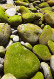 Pebbles with moss on the beach Royalty Free Stock Images