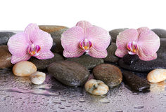 Pebbles and orchids. On wet background Stock Photos
